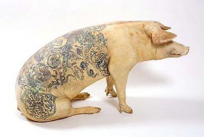 cochon-tatoue