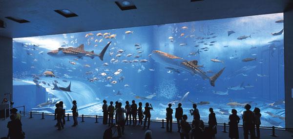 aquarium-geant-okinawa