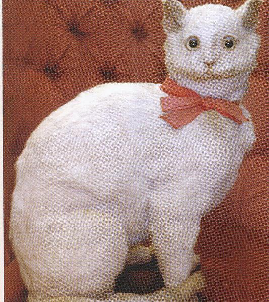 chat-empaillé