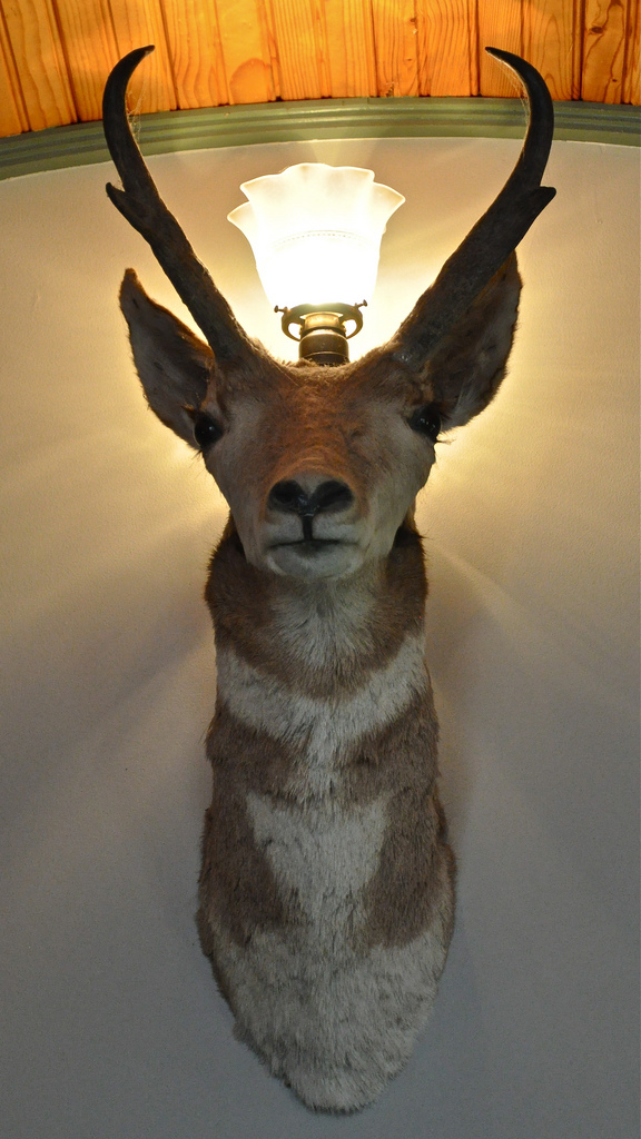 chevreuil-lampe