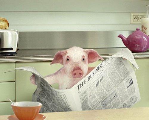 cochon-journal