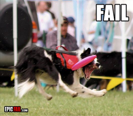 dog-frisbee-fail2