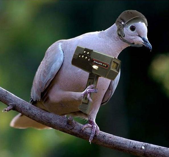 oiseau humour