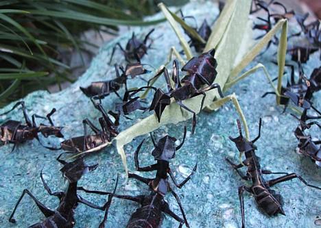 origami-fourmi