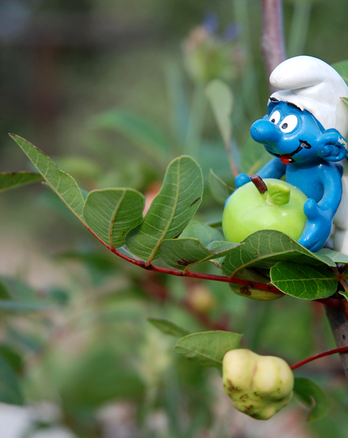 schtroumpf-pomme