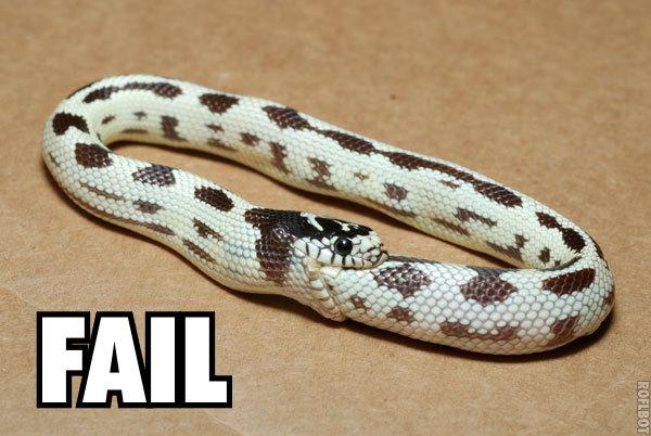 snake_fail