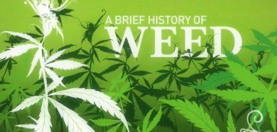 weeds-teaser