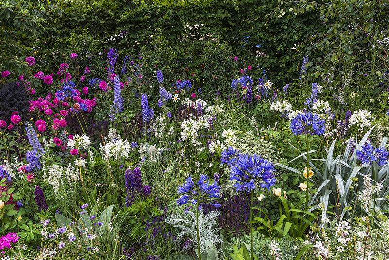 Massif de fleurs dans un jardin